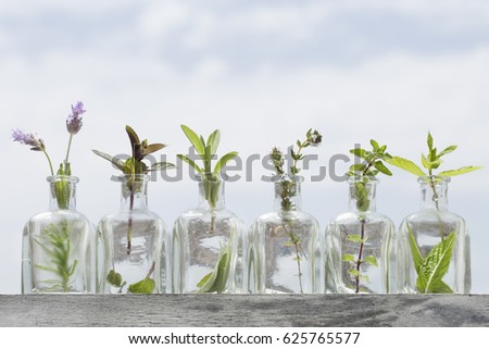 Bottle of essential oil with herbs lavender flower, basil flower,mint,oregano, sage, ,thyme and peppermint set up on sky background