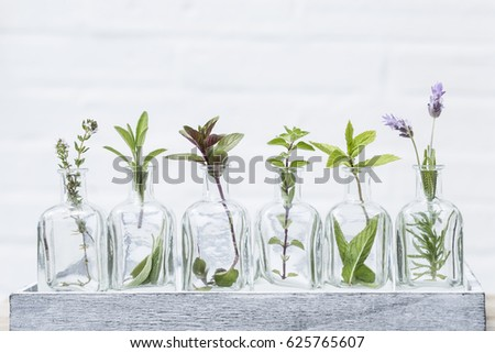 Bottle of essential oil with herbs lavender flower,mint,oregano, sage, ,thyme flower and peppermint set up on white wall background