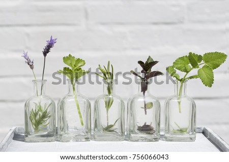Bottle of essential oil with herbs lavender flower, mint ,rosemary and parsley set up on white background .