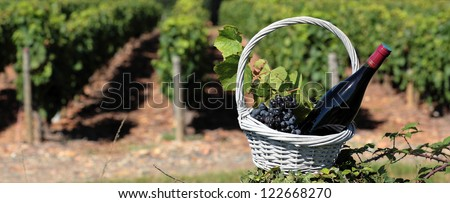 bottle of wine and grapes in basket in front of vineyard - stock photo