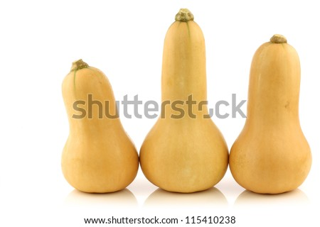 bottle shaped butternut pumpkins on a white background - stock photo