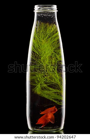 bottle with red fish on black background - stock photo