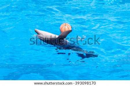 bottlenose dolphin in blue water with red ball - stock photo