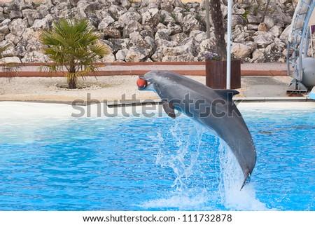 Bottlenose dolphin in the aquarium - stock photo