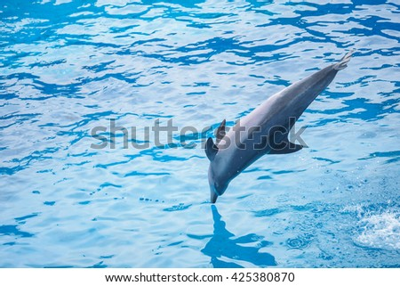 Bottlenose dolphin jumping from blue water. - stock photo