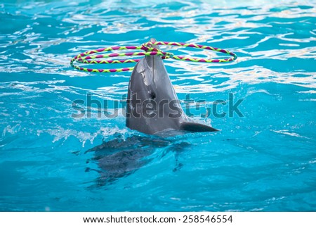 Bottlenose dolphin playing with the rings in the pool - stock photo