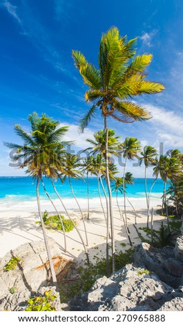 Bottom Bay is one of the most beautiful beaches on the Caribbean island of Barbados. It is a tropical paradise with palms hanging over turquoise sea. Wide vertical panoramic photo - stock photo