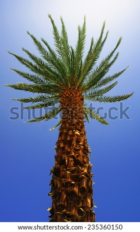 Bottom view of a palm tree in the rays of bright light - stock photo