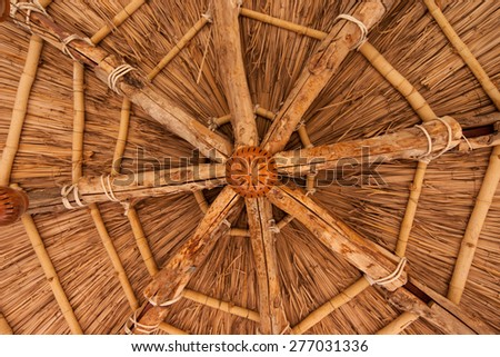 Bottom View On Bamboo Symmetrical Coneshaped Stock Photo