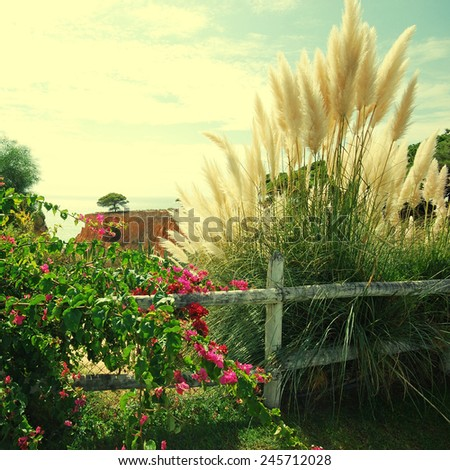 Bougainvillaea and reed on sky background. Landscape from Portugal, square toned image, instagram effect - stock photo