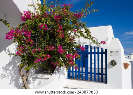 Bougainvillea and blue fence, Santorini, Greece - stock photo