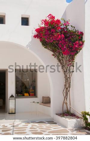 Bougainvillea flowers around a shop . Mykonos. - stock photo