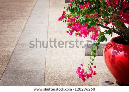Bougainvillea flowers in a patio. Bright pink flowers. Empty clean road nearby. - stock photo