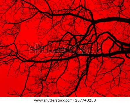 bough and twigs in red back - stock photo