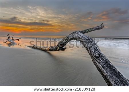 Bough on the beach in Hilton Head Island - stock photo