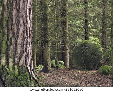 boulder covered moss in forest - stock photo