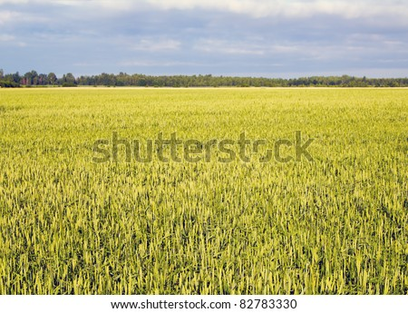 boundless field - stock photo