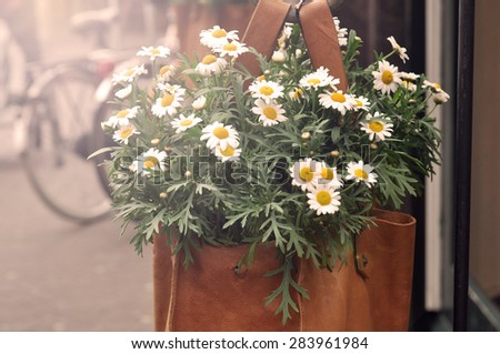 Bouquet camomiles in a bag - vintage