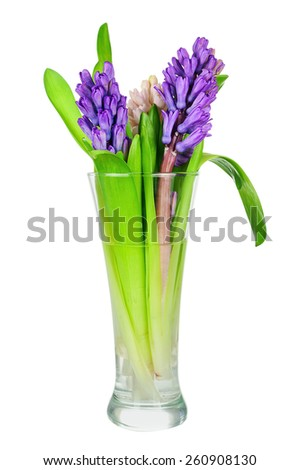 Bouquet from hyacinth flowers arrangement centerpiece isolated on white background. Closeup.  - stock photo