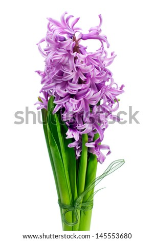 Bouquet from hyacinth isolated on white background. - stock photo