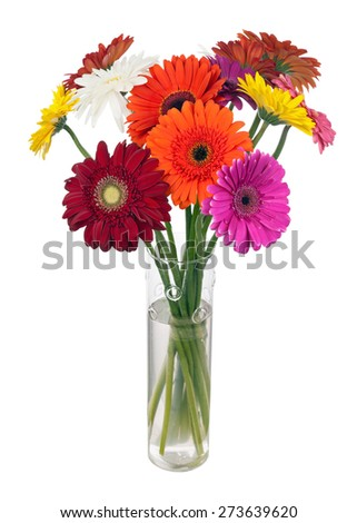 Bouquet from multi colored gerbera flowers in glass vase arrangement centerpiece isolated on white background. - stock photo