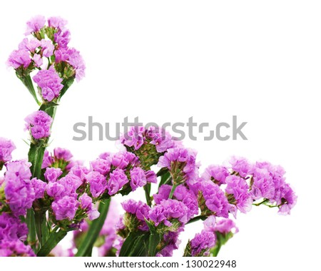 Bouquet from purple statice flowers arrangement isolated on white background. Selective focus.