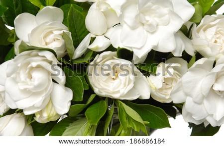 bouquet gardenia plant isolated - stock photo