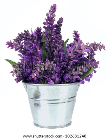 Bouquet of a fragrant sage - stock photo