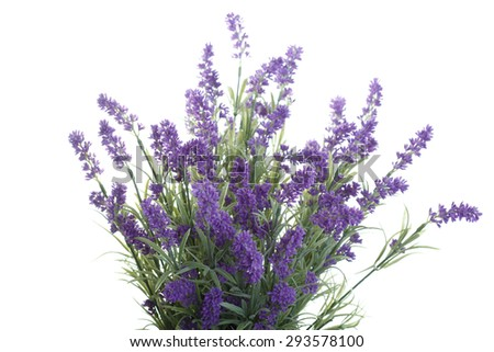 bouquet of artificial lavender isolated on a white background - stock photo