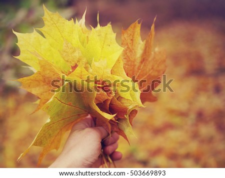 Bouquet of autumn yellow leaves in a hand. Autumn background with colorful leaves in vintage color