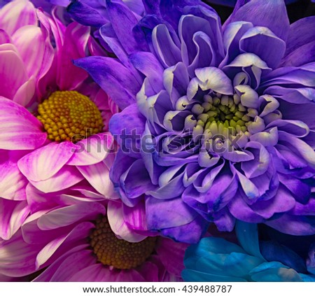 Bouquet of beautiful colorful chrysanthemums close-up macro