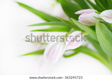 Bouquet of beautiful, delicate, beautiful colors of tulips