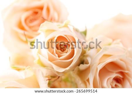 Bouquet of beautiful fresh roses, closeup - stock photo
