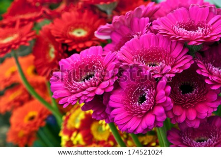 Bouquet of beautiful gerbera. Floral pattern. - stock photo