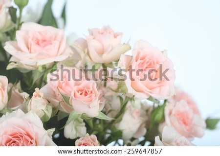 Bouquet of beautiful pink roses close-up on a light background