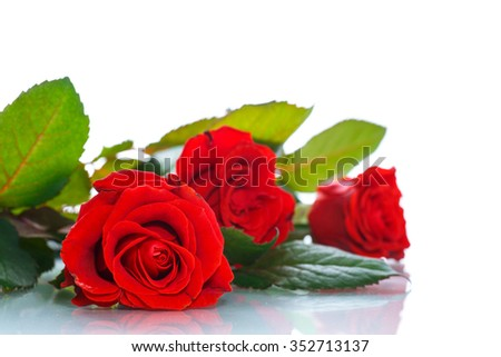 bouquet of beautiful red roses on a white background