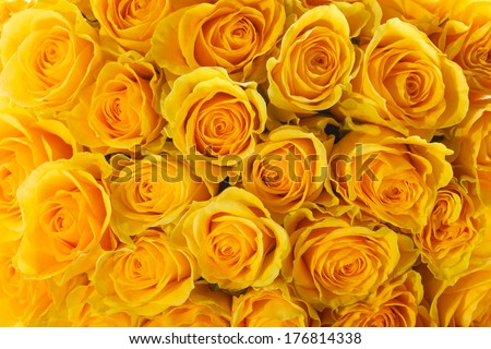 bouquet of beautiful roses on a white background - stock photo