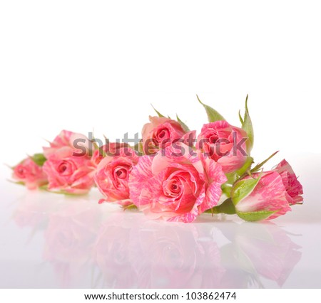 bouquet of beautiful roses on white - stock photo