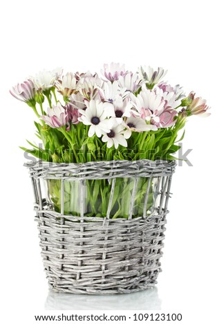 bouquet of beautiful summer flowers in wicker vase, isolated on white - stock photo