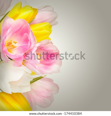 Bouquet of beautiful tulips flowers in vase
