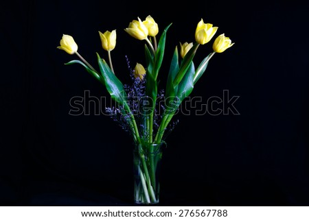 Bouquet of beautiful tulips yellow in glass vase isolated on black background - stock photo