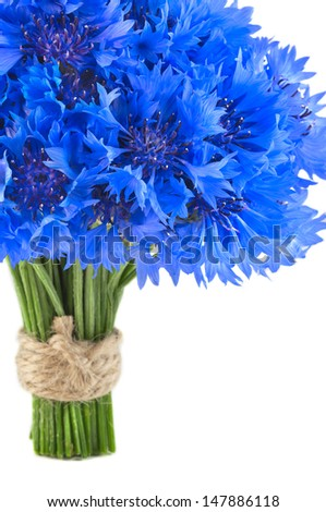 Bouquet of beautiful vivid blue flowers of cornflower isolated on white background. - stock photo