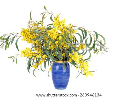 Bouquet of blossoming mimosa - stock photo