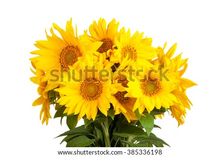 Bouquet of blossoming sunflowers on a white background - stock photo