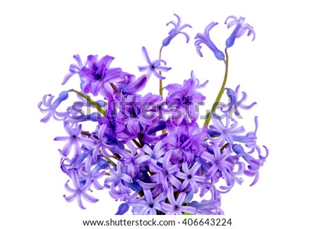 bouquet of blue flowers and purple flowers