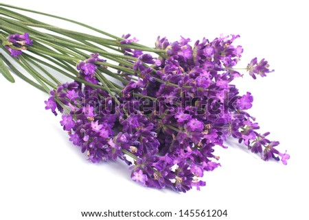 Bouquet of blue lavender flowers isolated on white background - stock photo