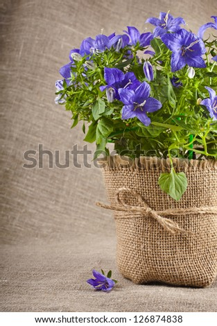 bouquet of blueflowers on canvas texture backdrop  with copy space for text - stock photo