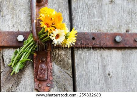 bouquet of calendula  - stock photo