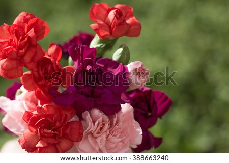 Bouquet of carnations. Flowers. Carnation flowers. - stock photo