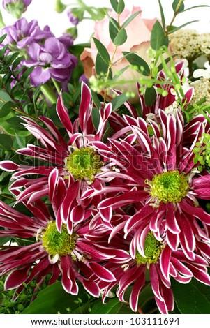 bouquet of chrysanthemum - stock photo